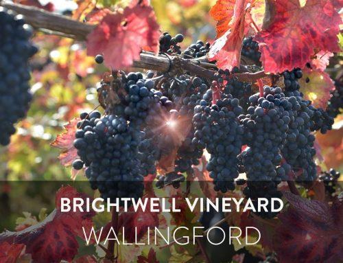 Brightwell Vineyard